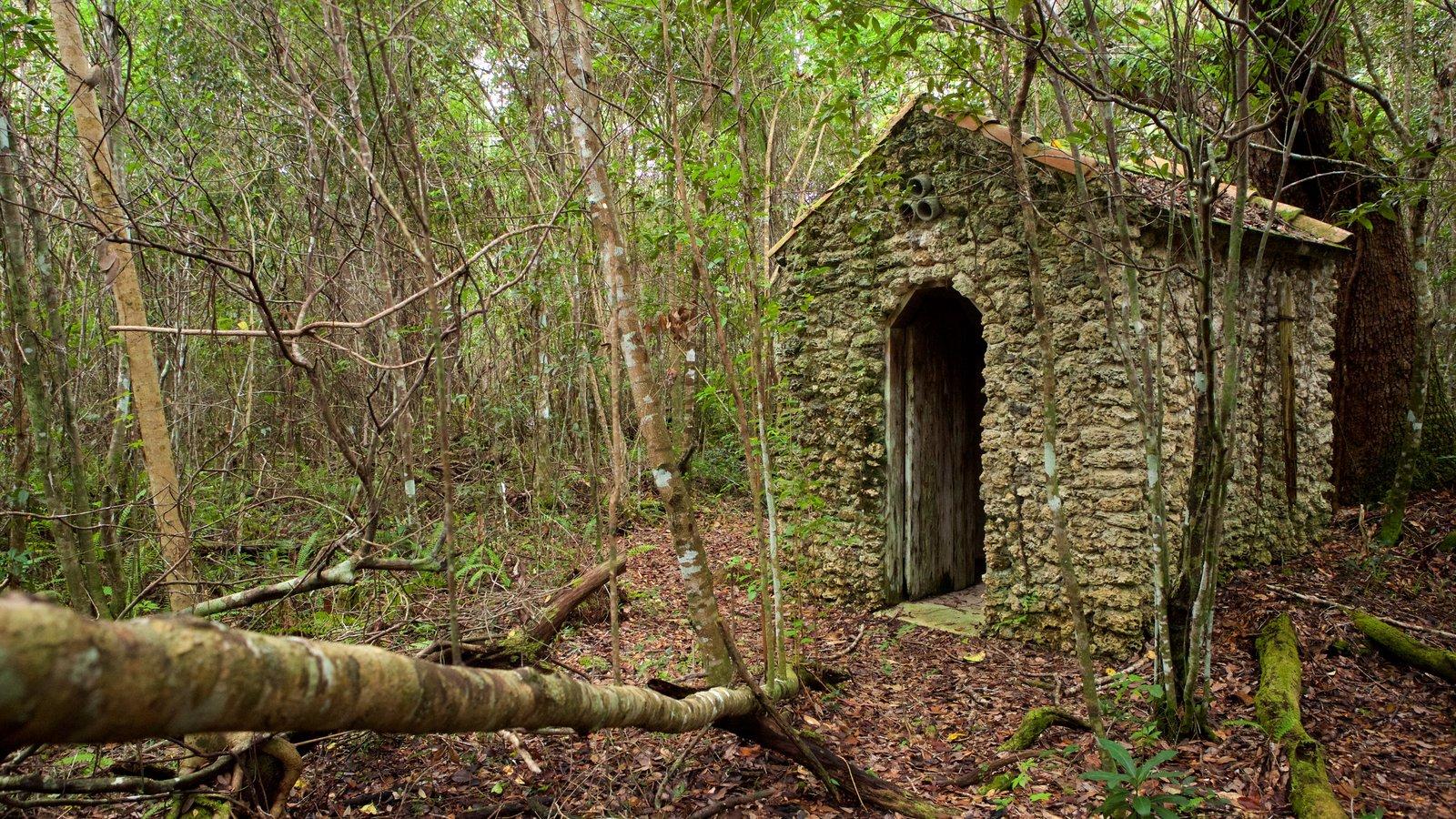 Everglades National Park caracterizando cenas tranquilas, florestas e uma casa