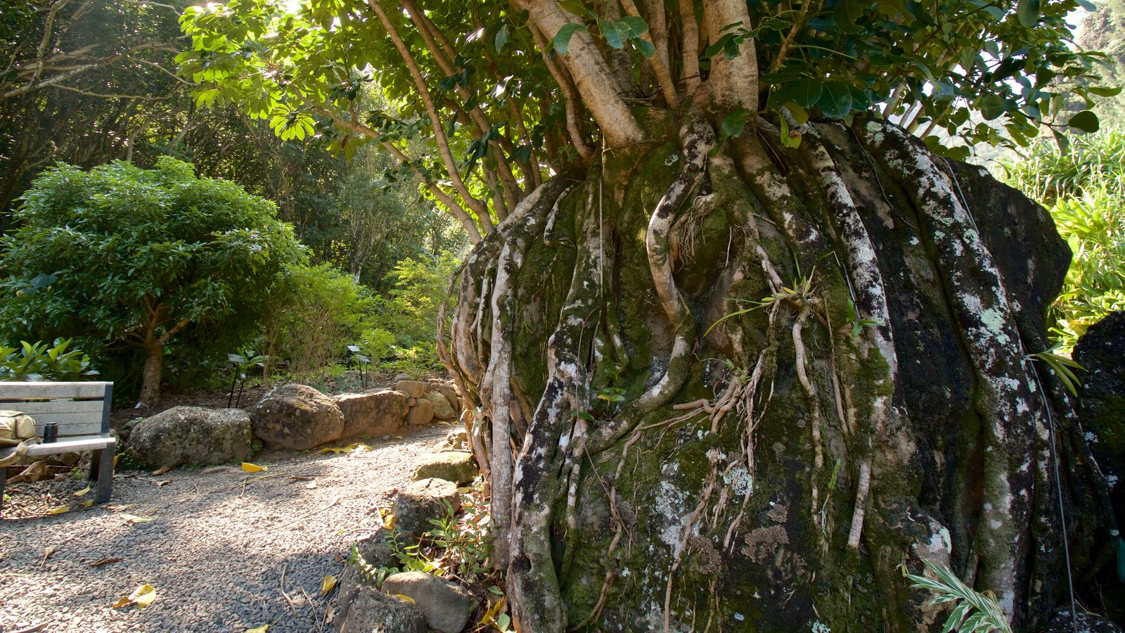 Limahuli Gardens and Preserve Pictures: View Photos & Images of ...