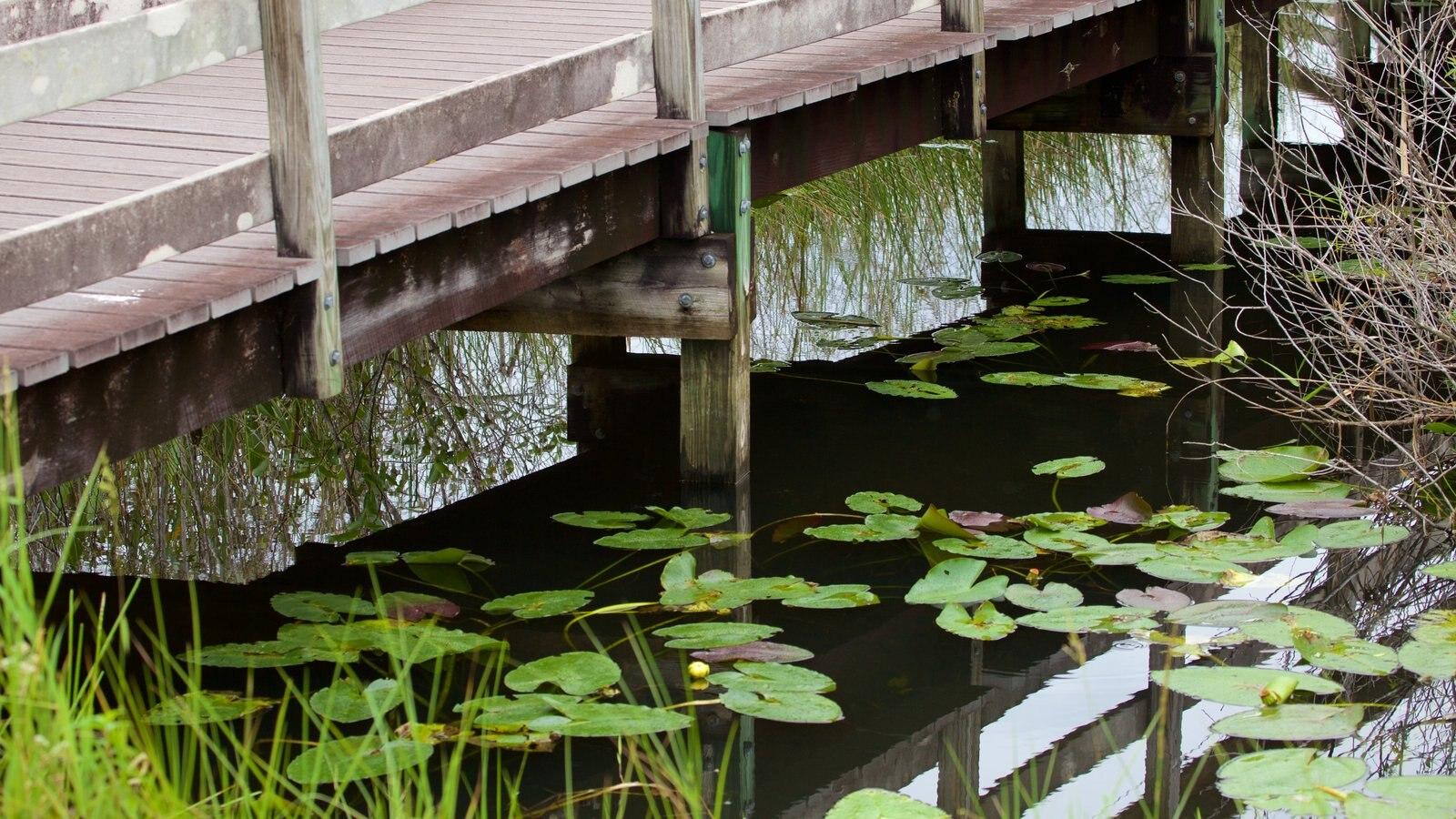 Southeast Florida showing a lake or waterhole and a bridge