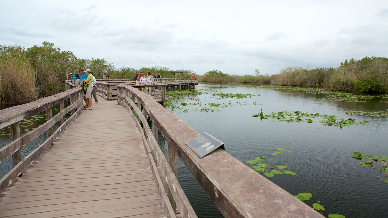 Anhinga Trail featuring wetlands, a bridge and a river or creek