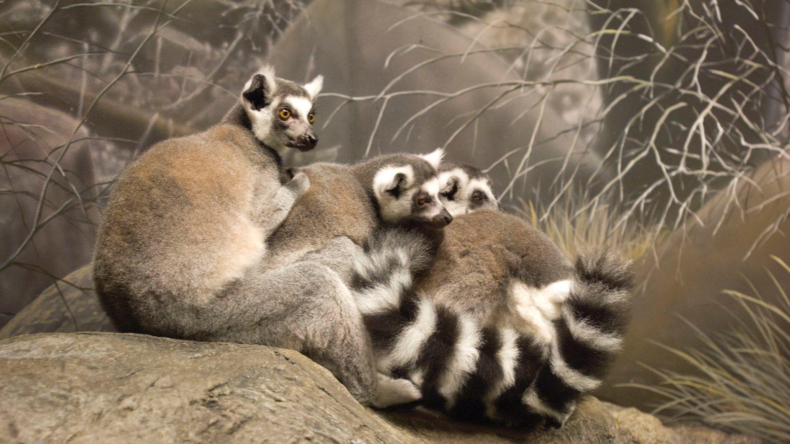 Henry Doorly Zoo mostrando animais de zoológico, animais e animais fofos ou amigáveis