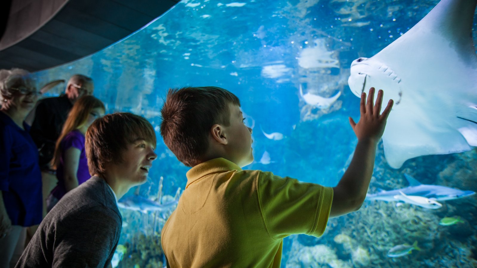 Henry Doorly Zoo caracterizando animais de zoológico e vida marinha assim como crianças
