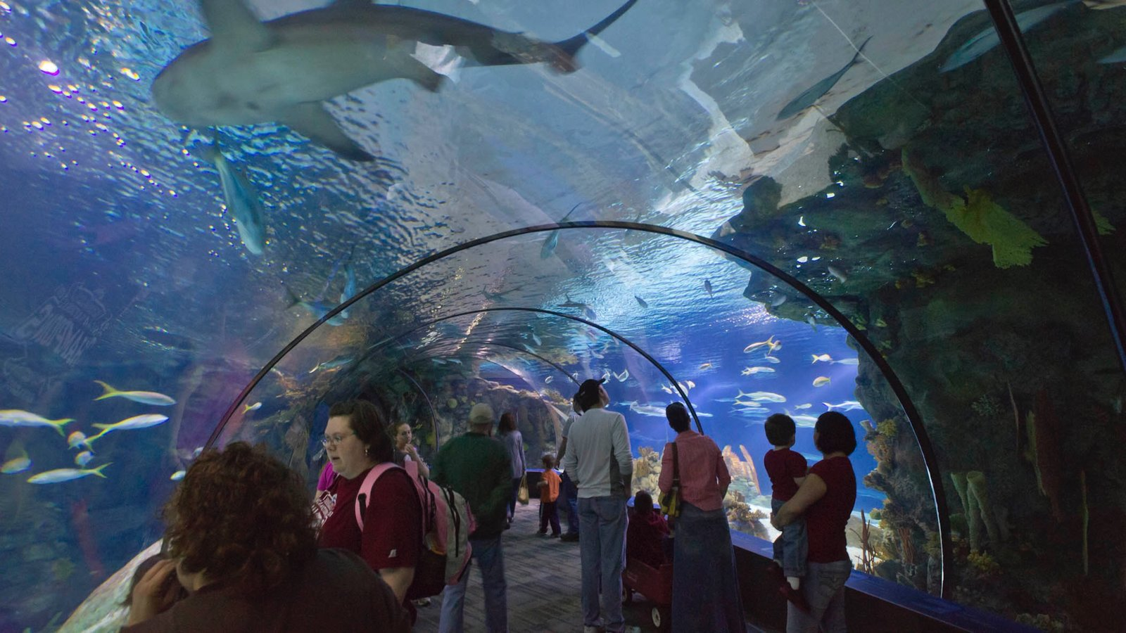 Henry Doorly Zoo which includes interior views dangerous animals and marine life & Henry Doorly Zoo \u0026 Aquarium Pictures: View Photos \u0026 Images of Henry ...