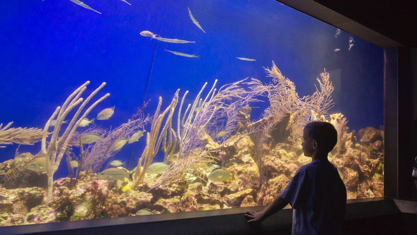 Henry Doorly Zoo & Aquarium Pictures: View Photos & Images of ...