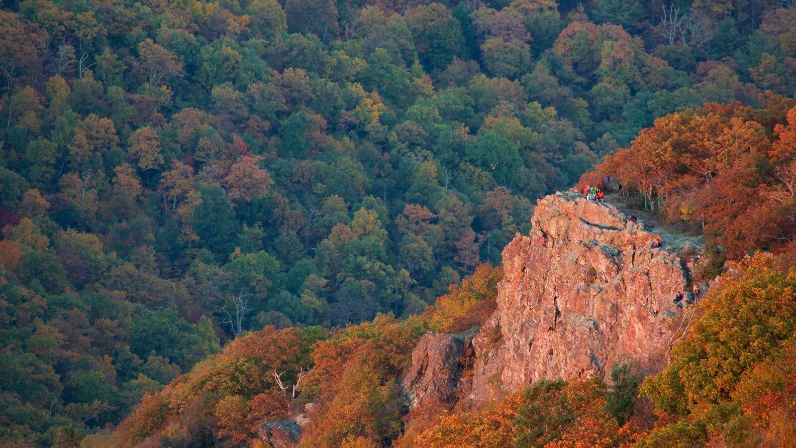 Parque Nacional Shenandoah mostrando escenas tranquilas