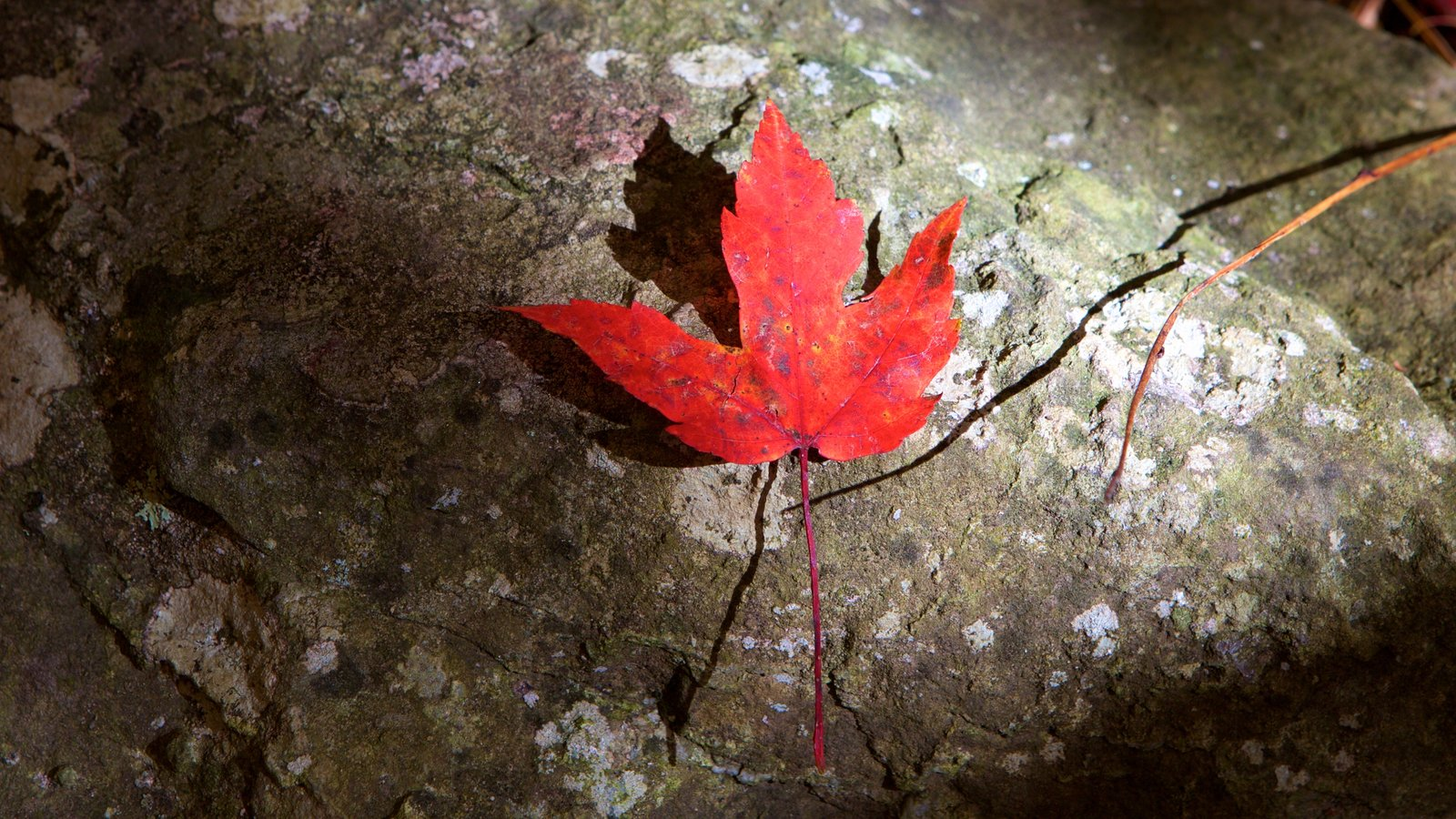 Parque Nacional Shenandoah que incluye los colores del otoño