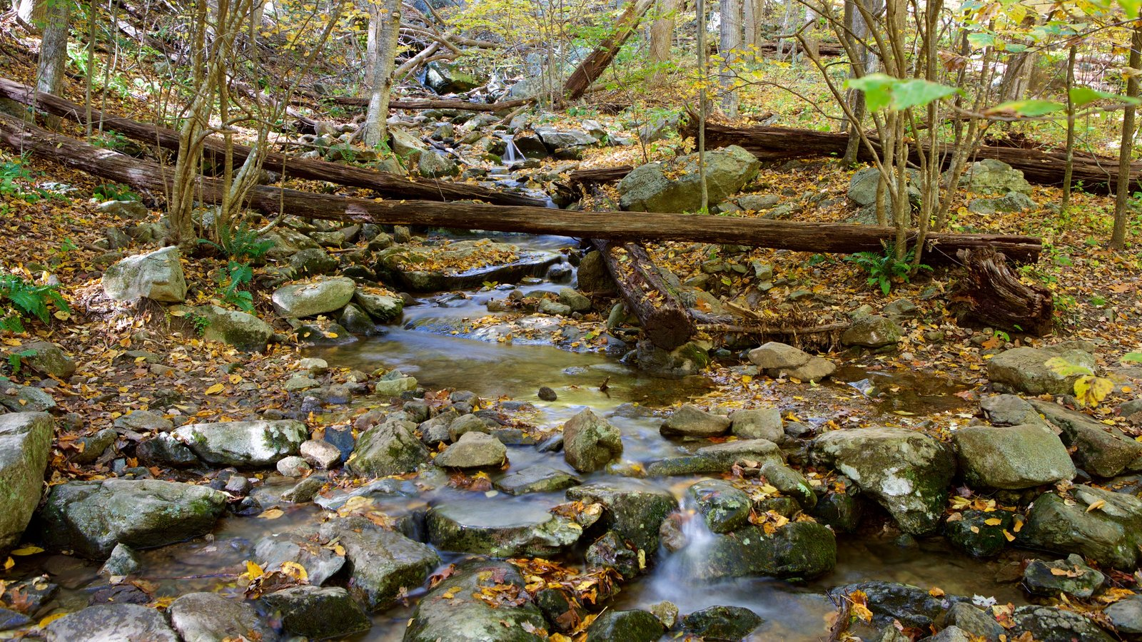 Shenandoah National Park which includes a river or creek and forest scenes