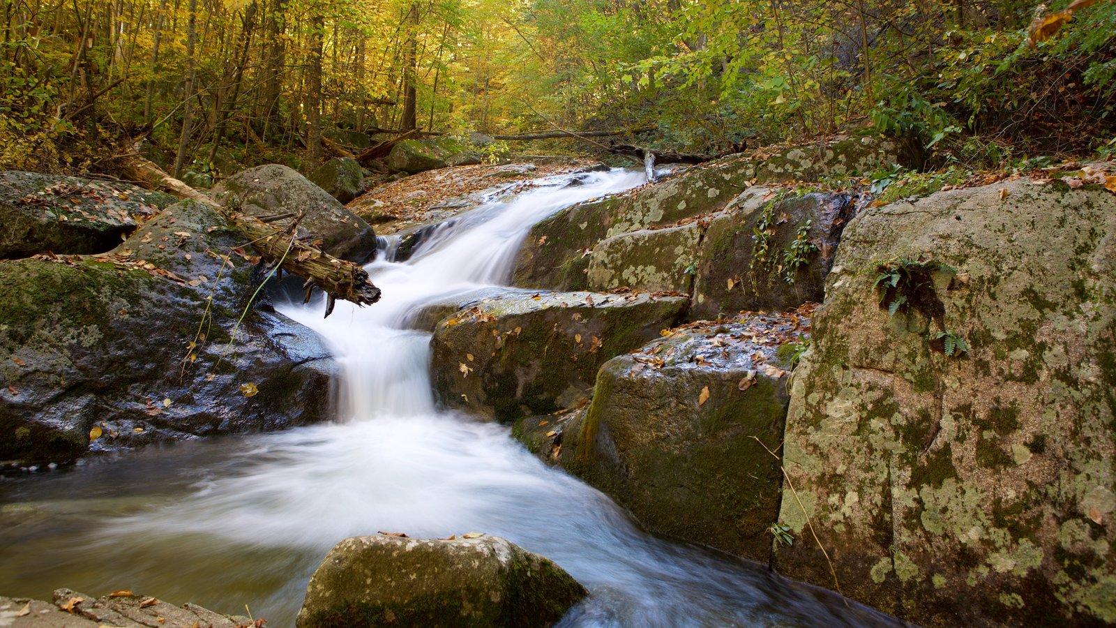 Parque Nacional Shenandoah ofreciendo escenas forestales, los colores del otoño y un río o arroyo