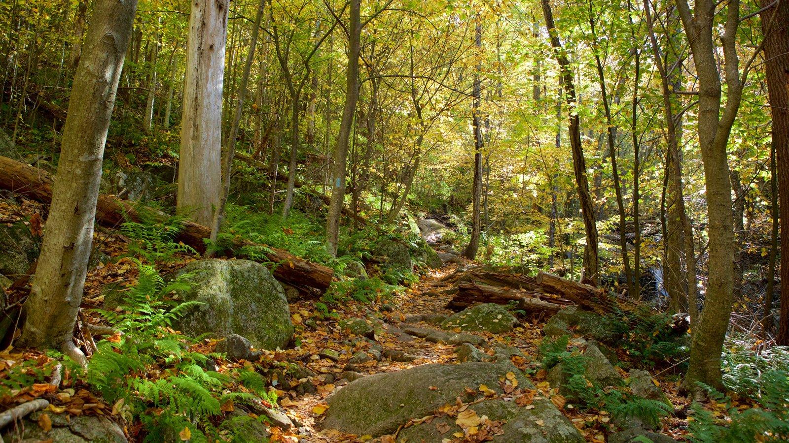 Parque Nacional Shenandoah mostrando escenas forestales y los colores del otoño