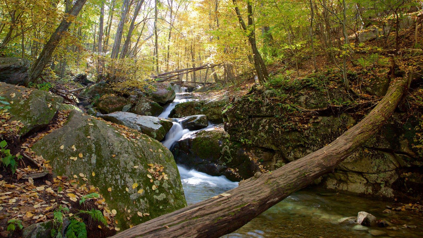 Parque Nacional Shenandoah ofreciendo hojas de otoño, escenas forestales y un río o arroyo