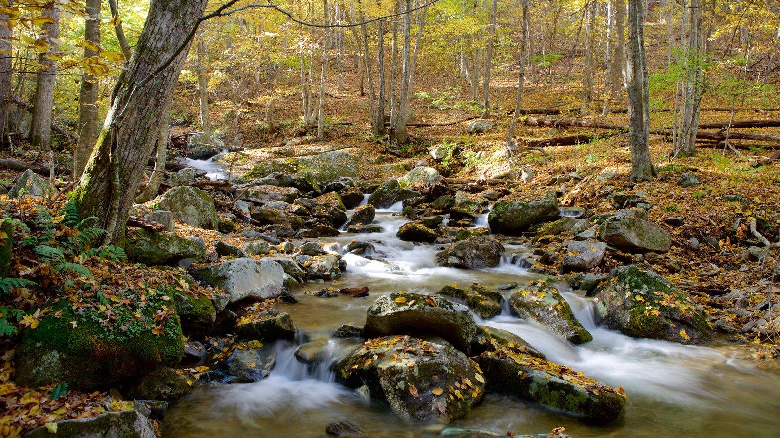 Parque Nacional Shenandoah ofreciendo un río o arroyo, escenas forestales y hojas de otoño