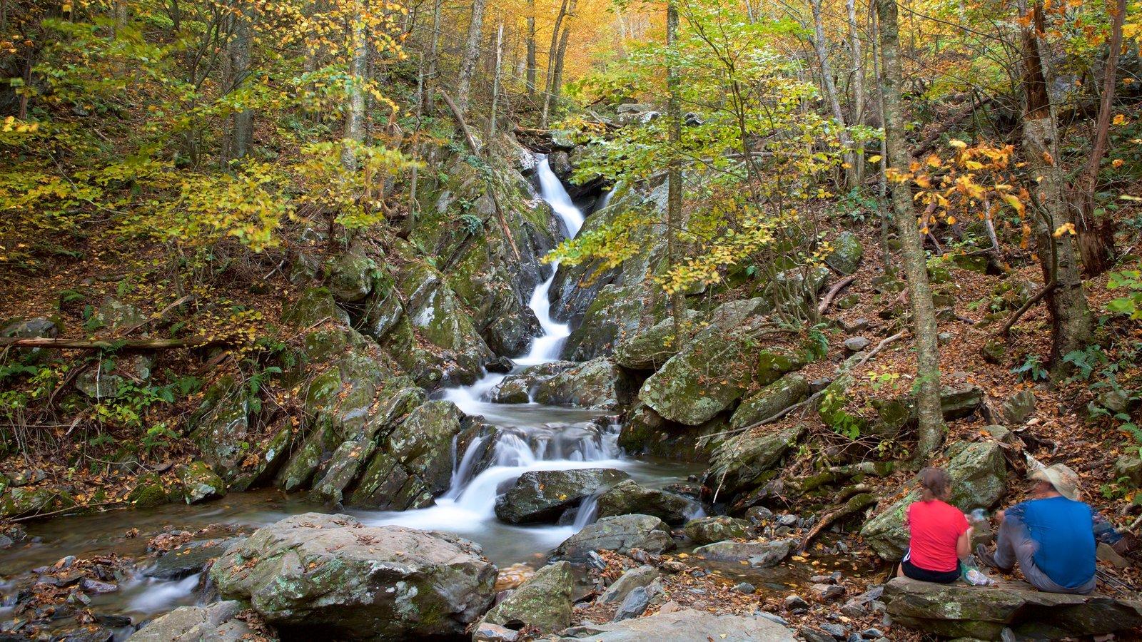 Parque Nacional Shenandoah mostrando un río o arroyo y bosques y también una pareja
