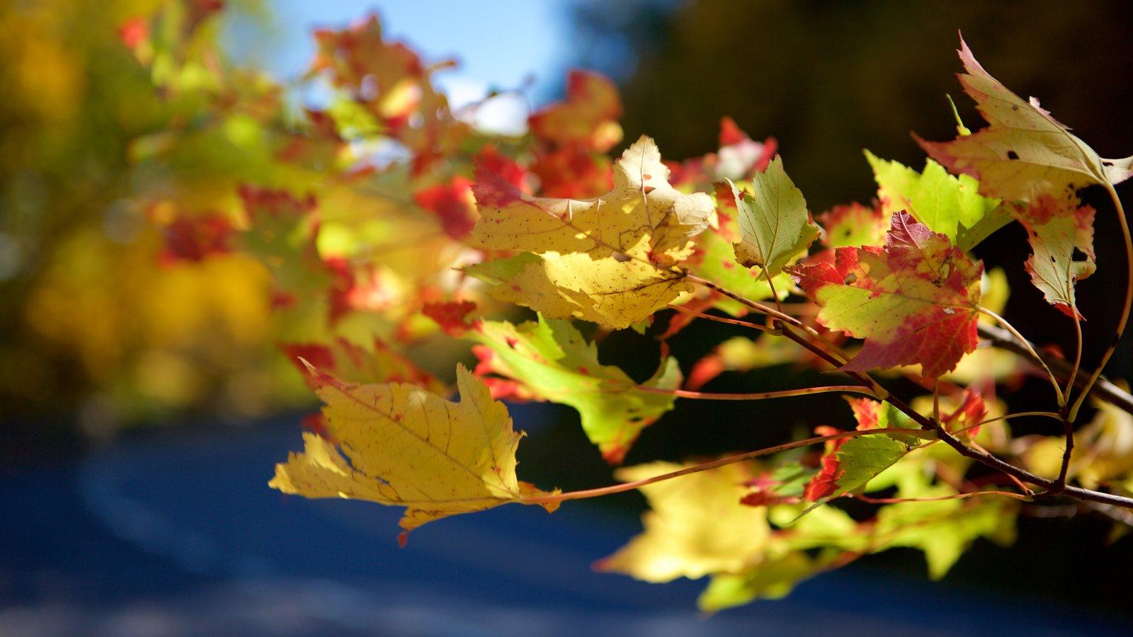 Parque Nacional Shenandoah ofreciendo hojas de otoño