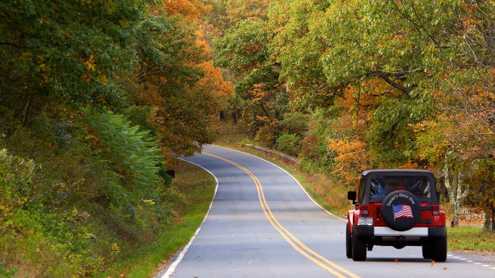 Parque Nacional Shenandoah que incluye escenas urbanas y bosques