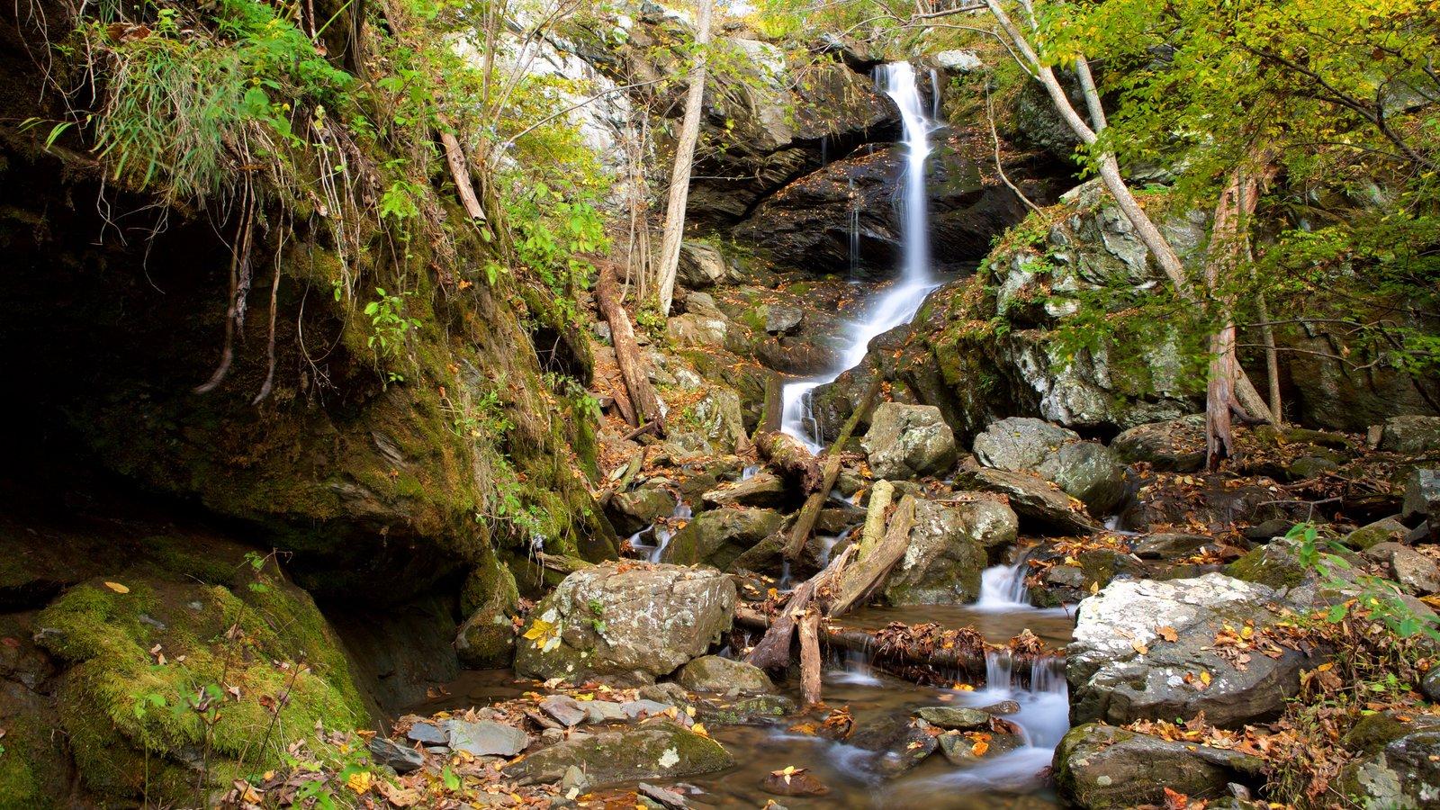 Parque Nacional Shenandoah que incluye un río o arroyo, montañas y una cascada