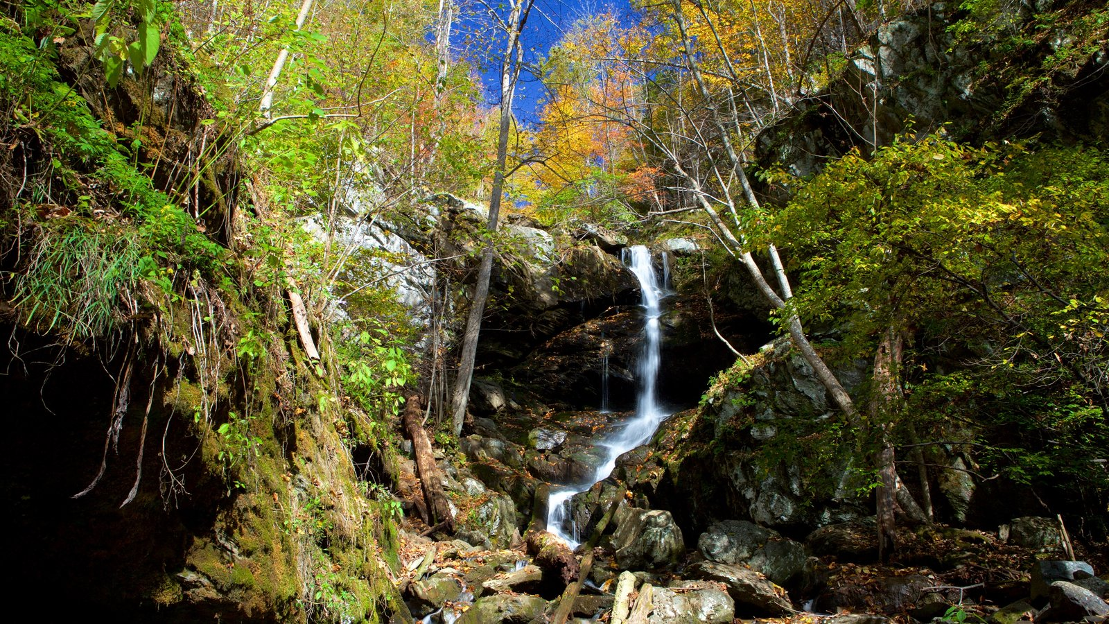 Shenandoah National Park showing a cascade, forest scenes and mountains
