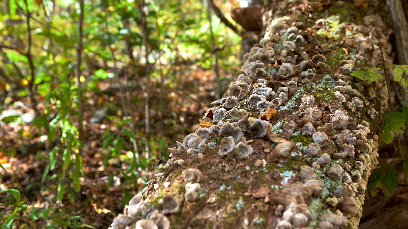Parque Nacional Shenandoah ofreciendo escenas forestales