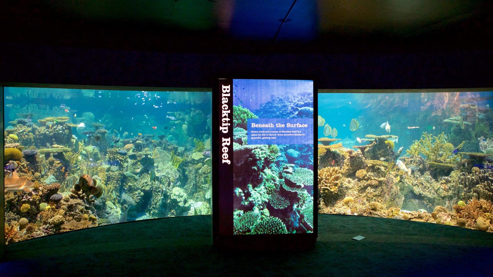 the national aquarium in baltimore an O national aquarium está localizado no porto revitalizado de baltimore em uma área muito bonita da cidade, incluindo shopping, museus, restaurantes, visita a.