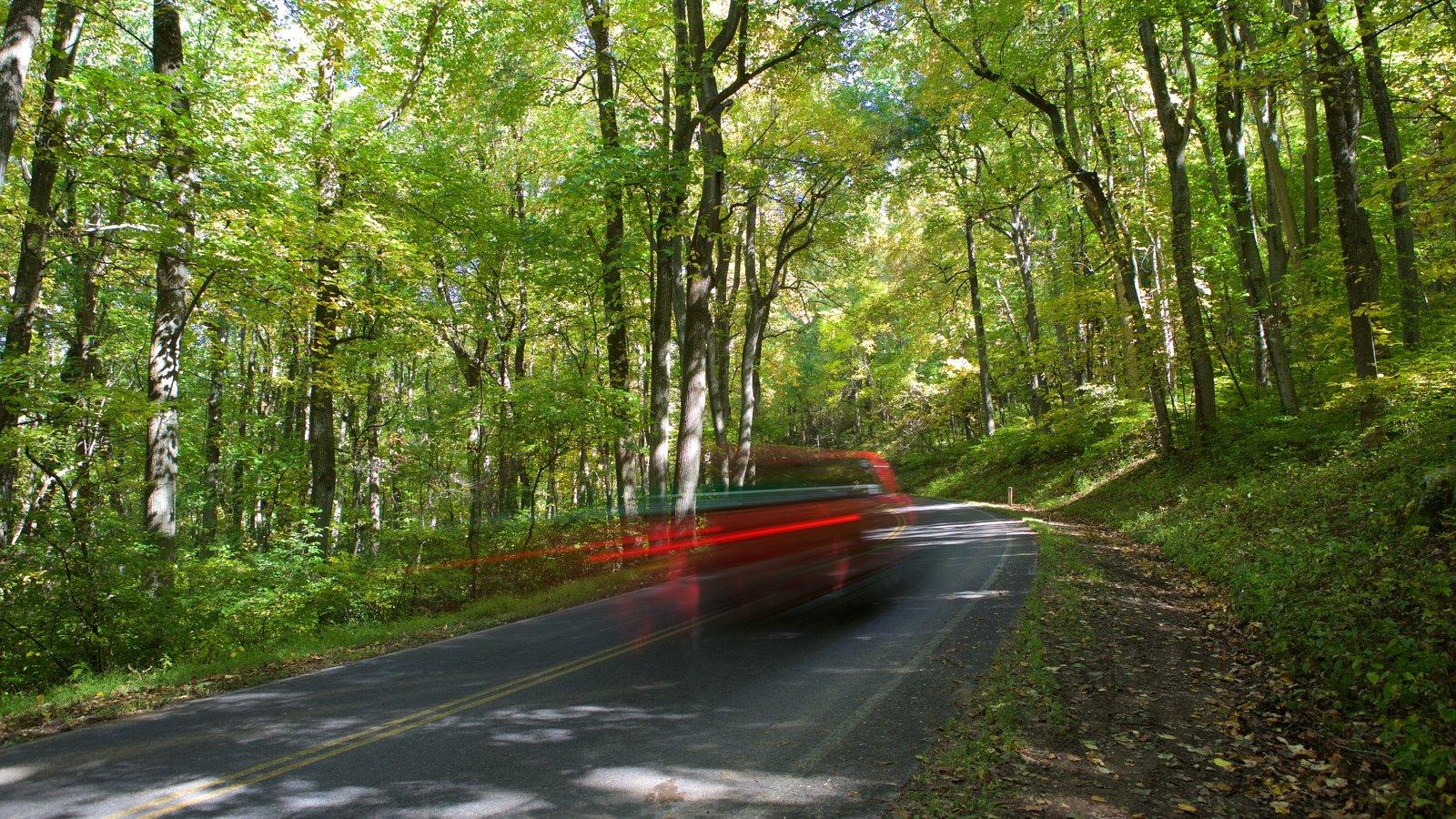 Parque Nacional Shenandoah que incluye bosques
