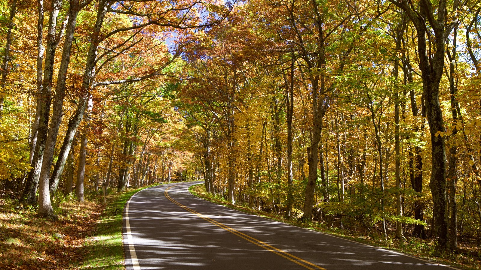Shenandoah National Park featuring autumn leaves and forest scenes