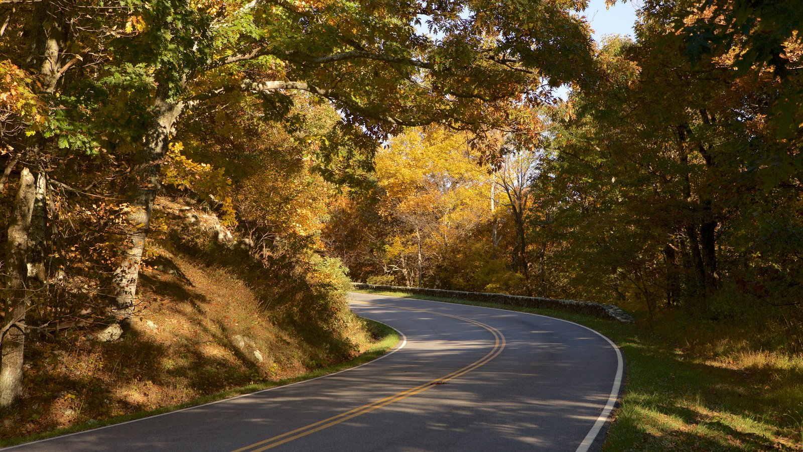 Shenandoah National Park featuring autumn leaves and forests