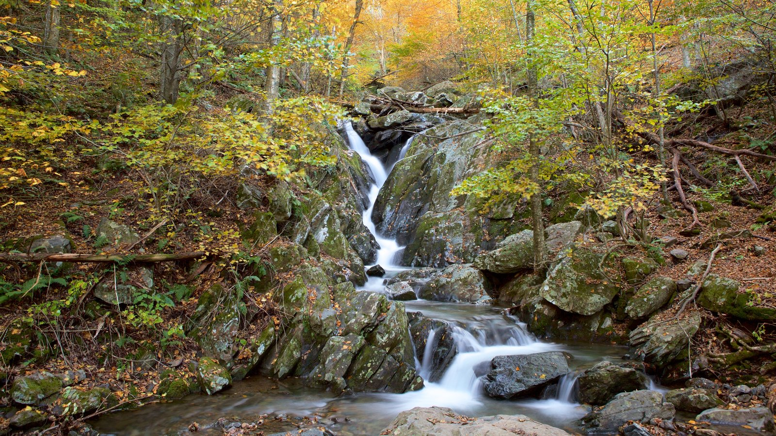 Shenandoah National Park which includes a waterfall, a river or creek and forest scenes