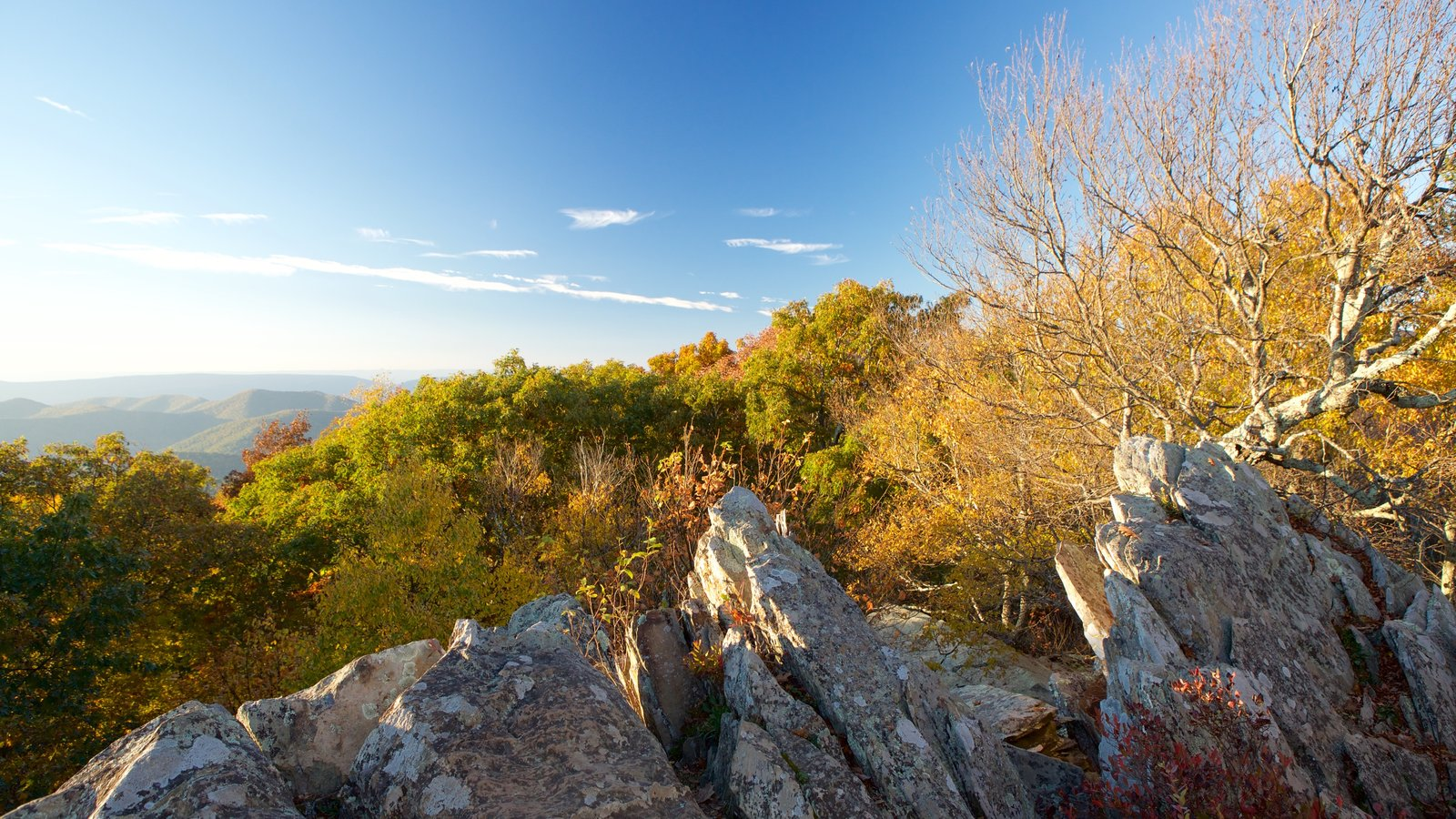Shenandoah National Park showing tranquil scenes and landscape views
