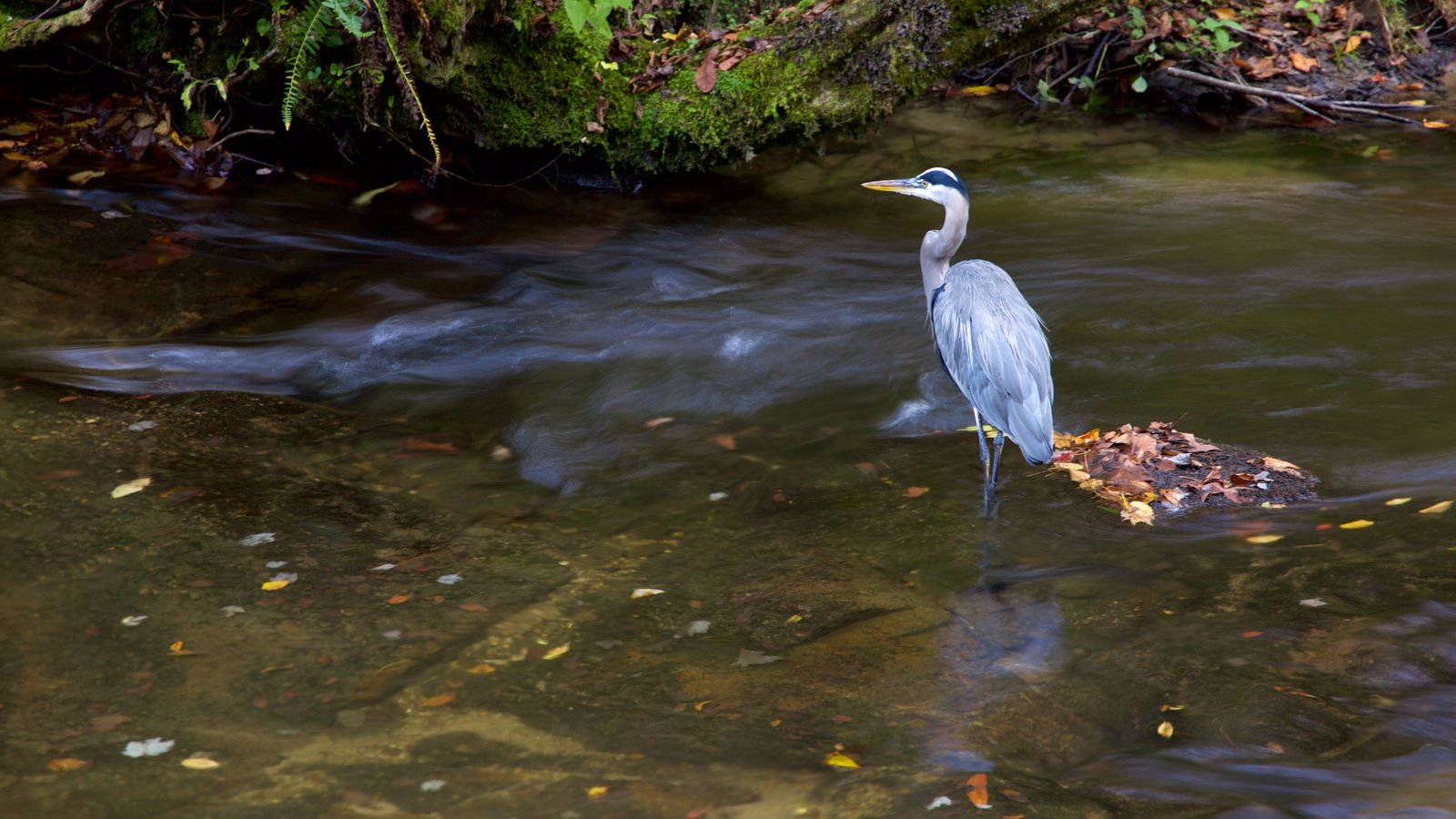 Great Smoky Mountains National Park featuring bird life and a river or creek