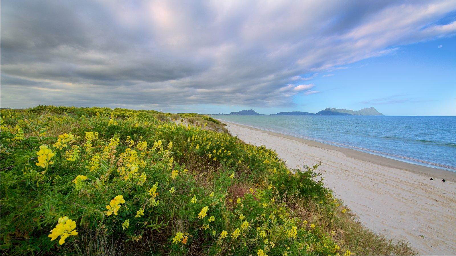 Whangarei Heads que incluye una playa, vistas generales de la costa y flores silvestres