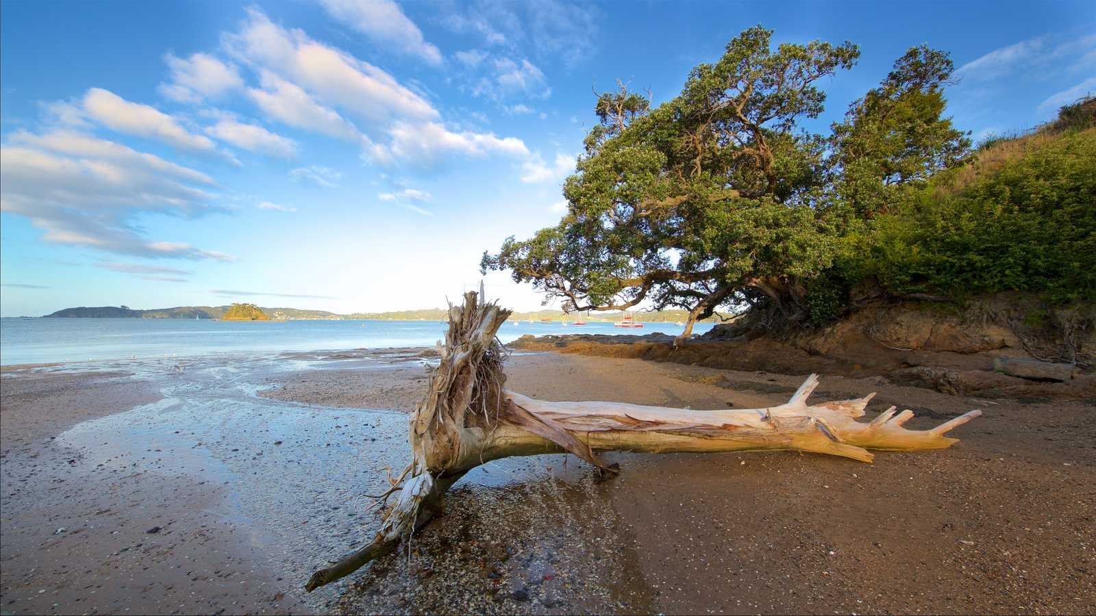 Paihia which includes a sandy beach, a bay or harbor and a pebble beach
