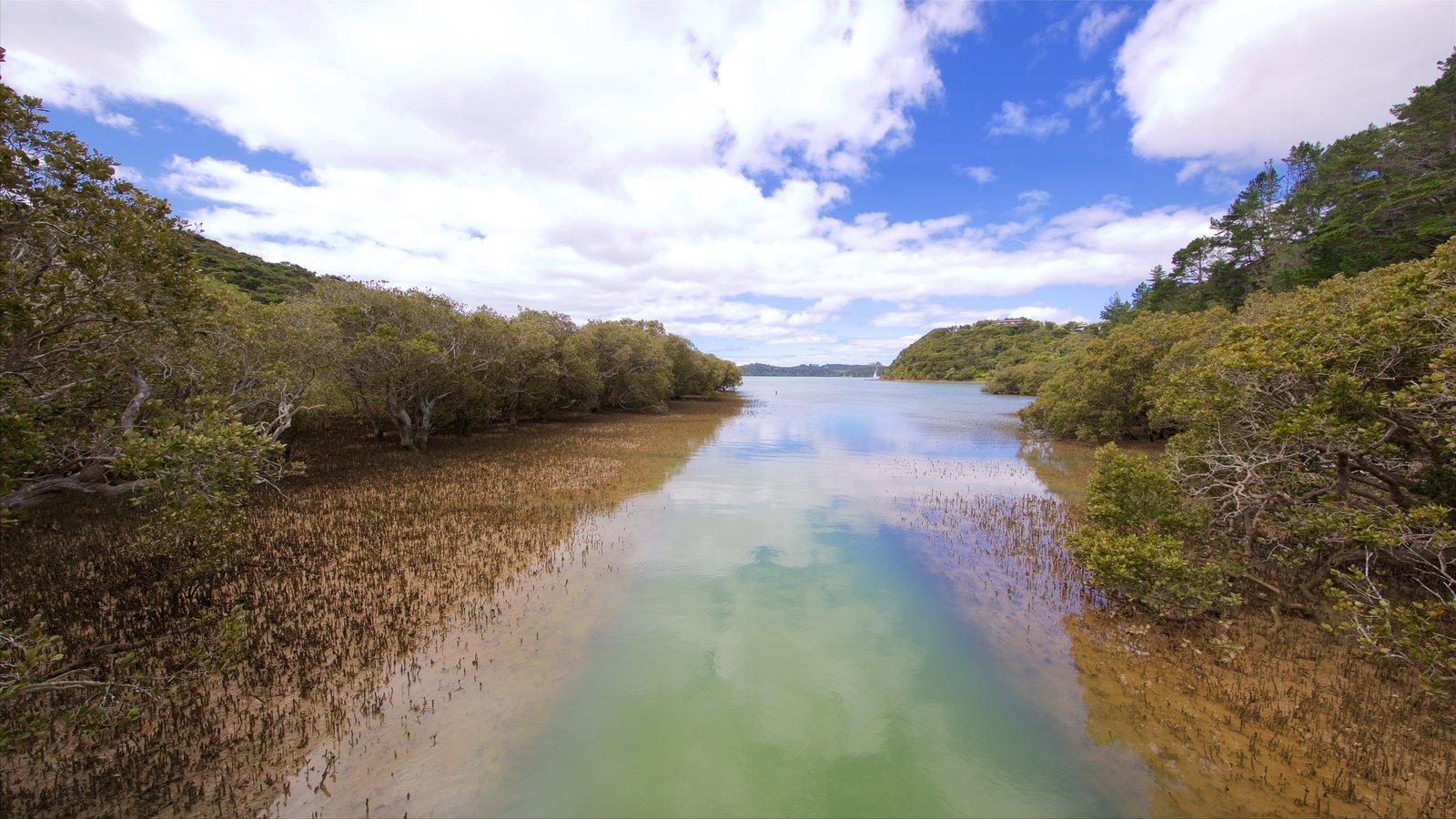 Paihia mostrando manglares y vistas generales de la costa