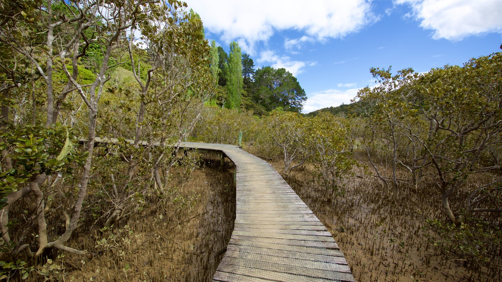 Paihia which includes mangroves