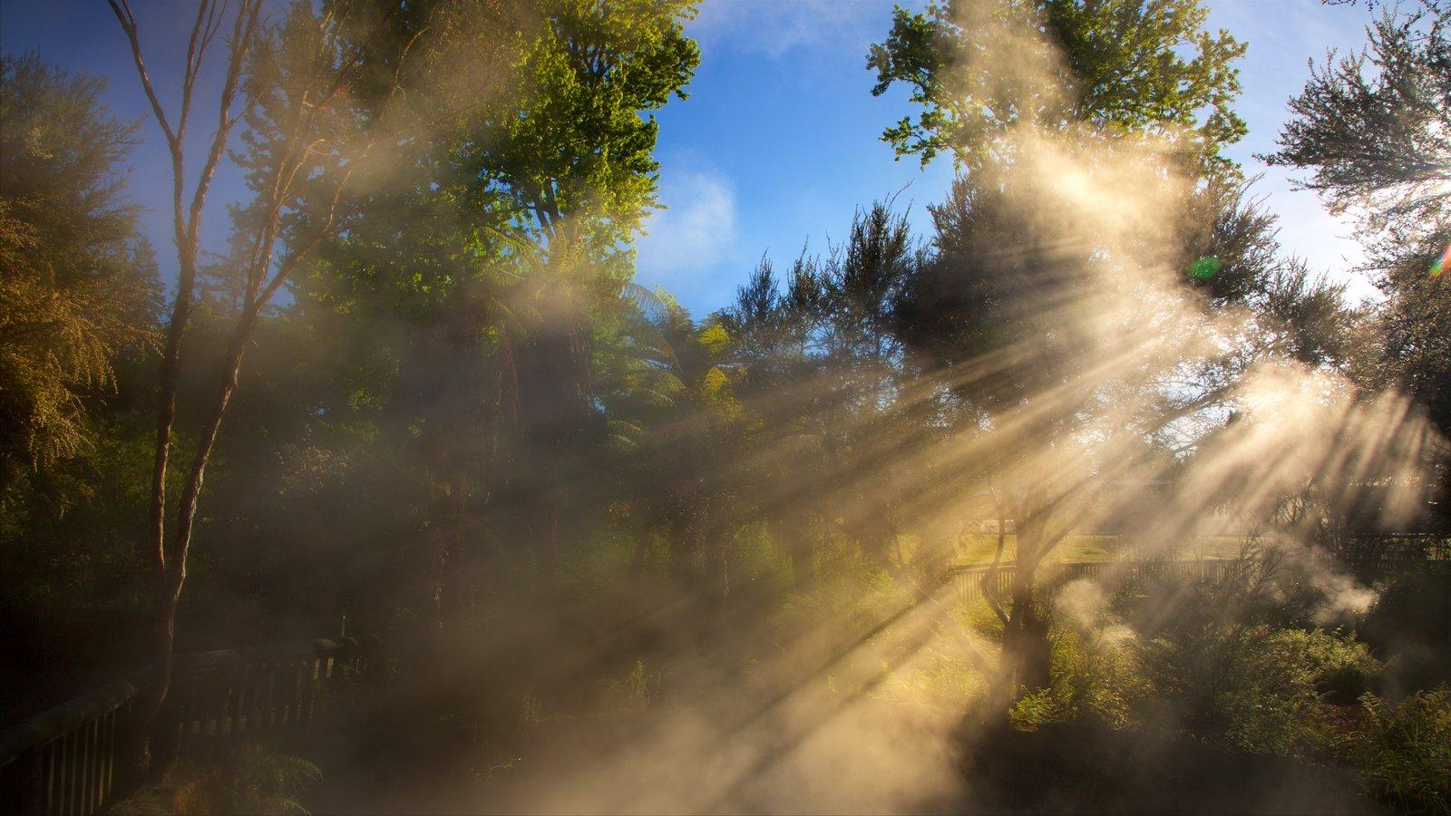 Kuirau Park caracterizando uma fonte termal, um parque e neblina
