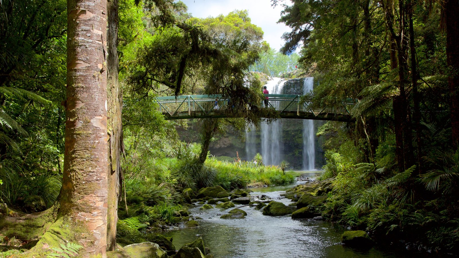Whangarei Falls featuring a river or creek, a bridge and forest scenes