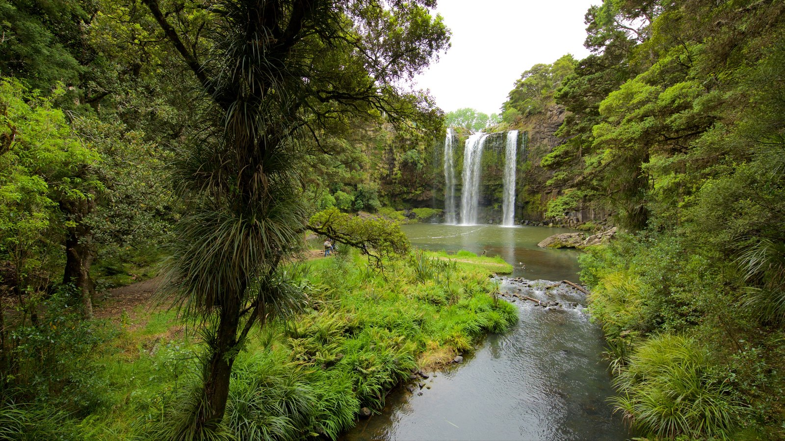 Whangarei Falls showing forests, a cascade and a river or creek