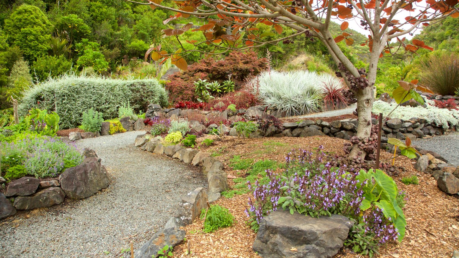 Gardens & Parks Pictures: View Images of Whangarei Quarry Gardens