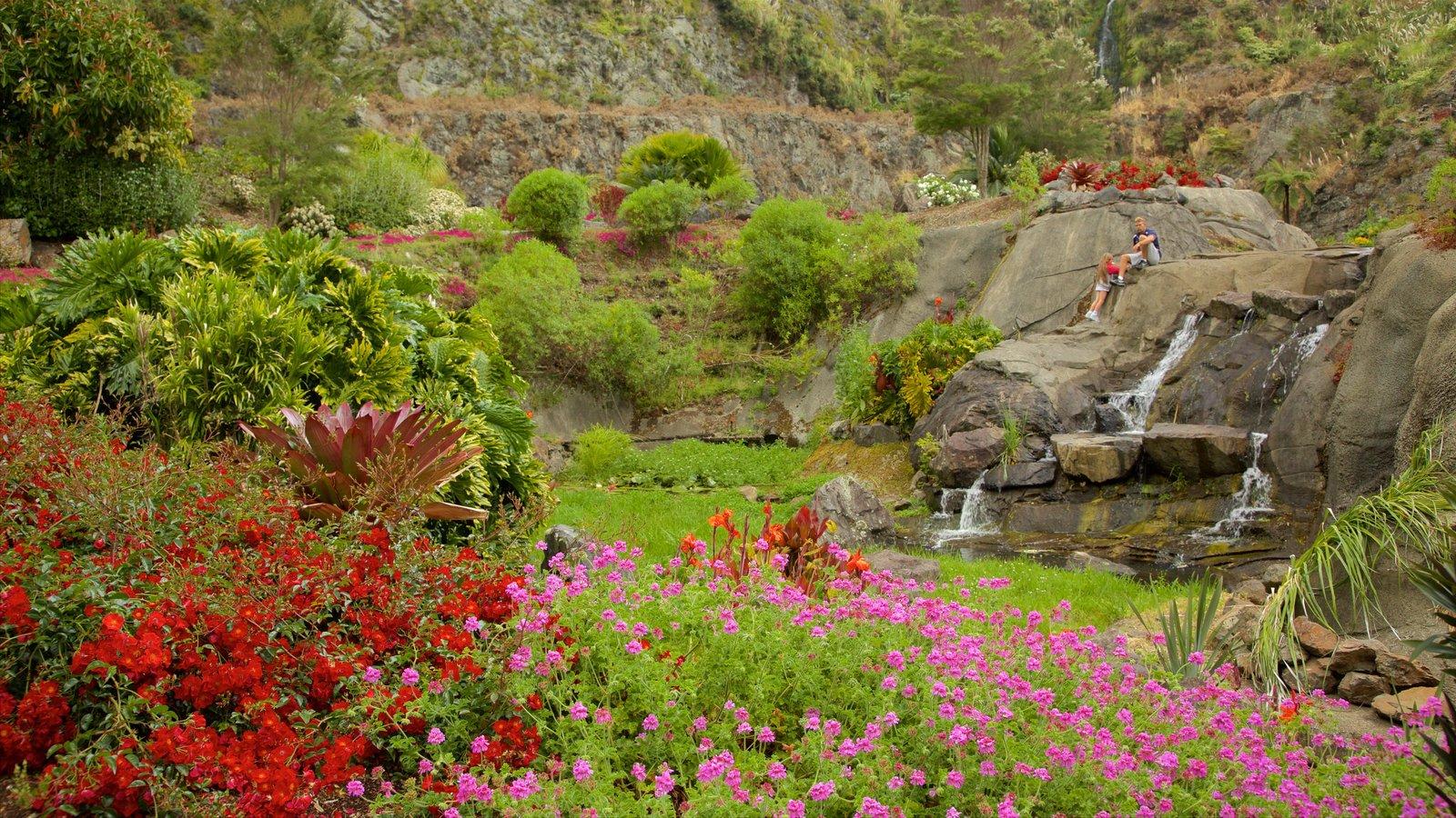 Whangarei Quarry Gardens which includes a park and a cascade