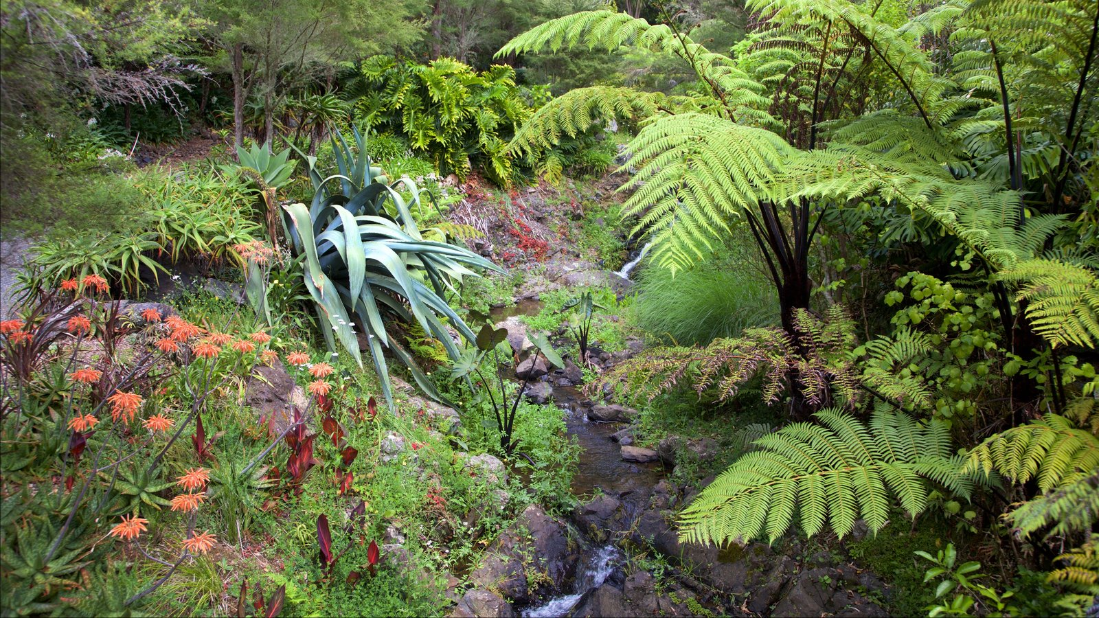 Whangarei Quarry Gardens which includes a garden