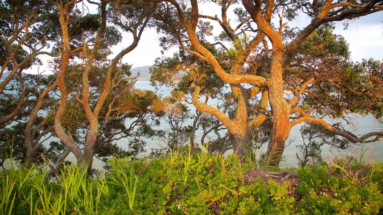 Whangarei Heads featuring a lake or waterhole