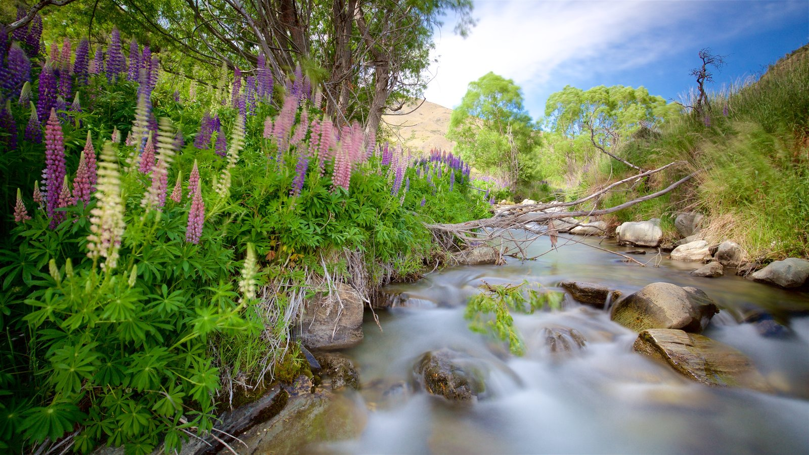 Queenstown showing tranquil scenes, a river or creek and wild flowers