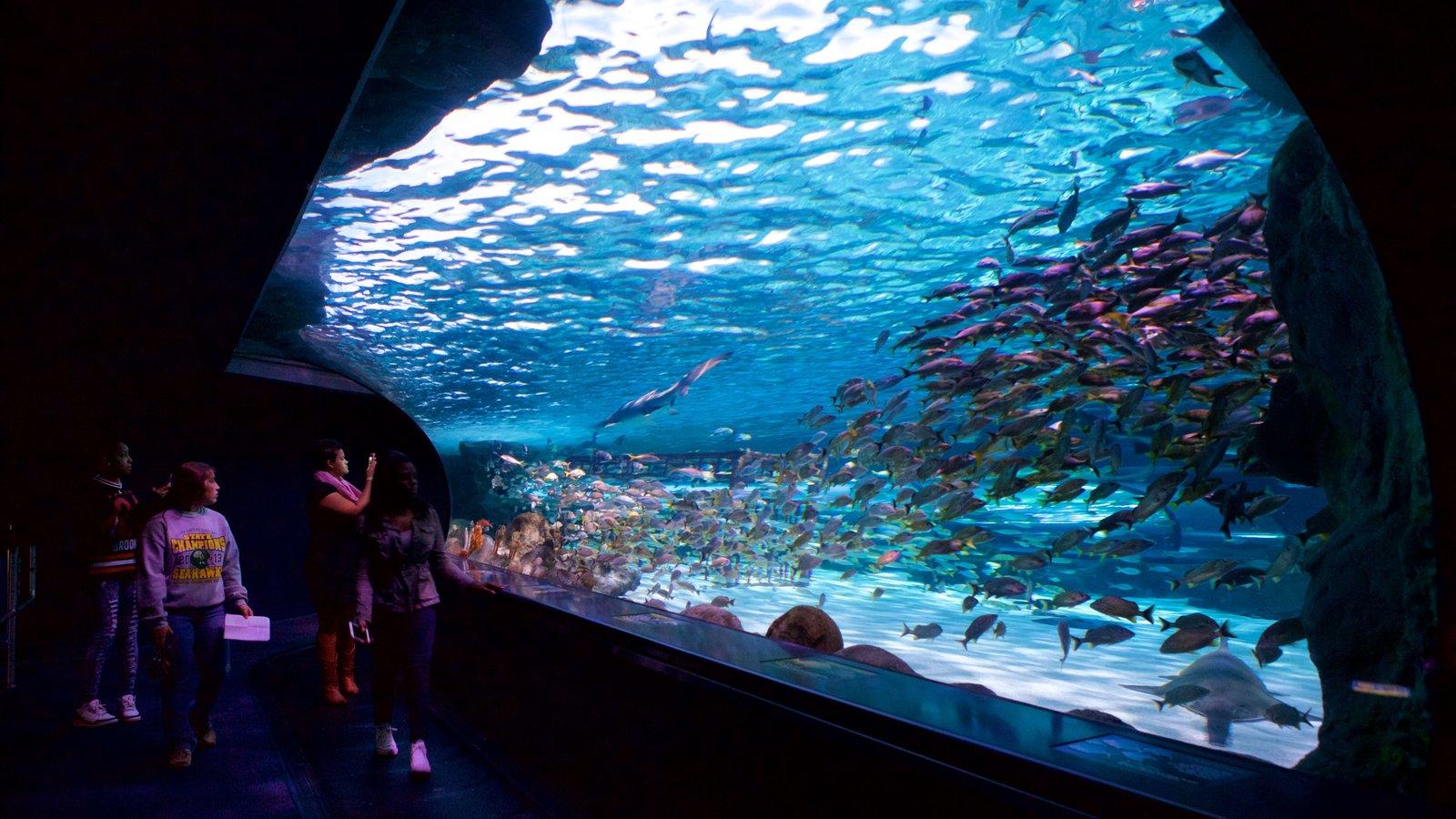 Região costeira da Carolina do Sul caracterizando vida marinha e vistas internas