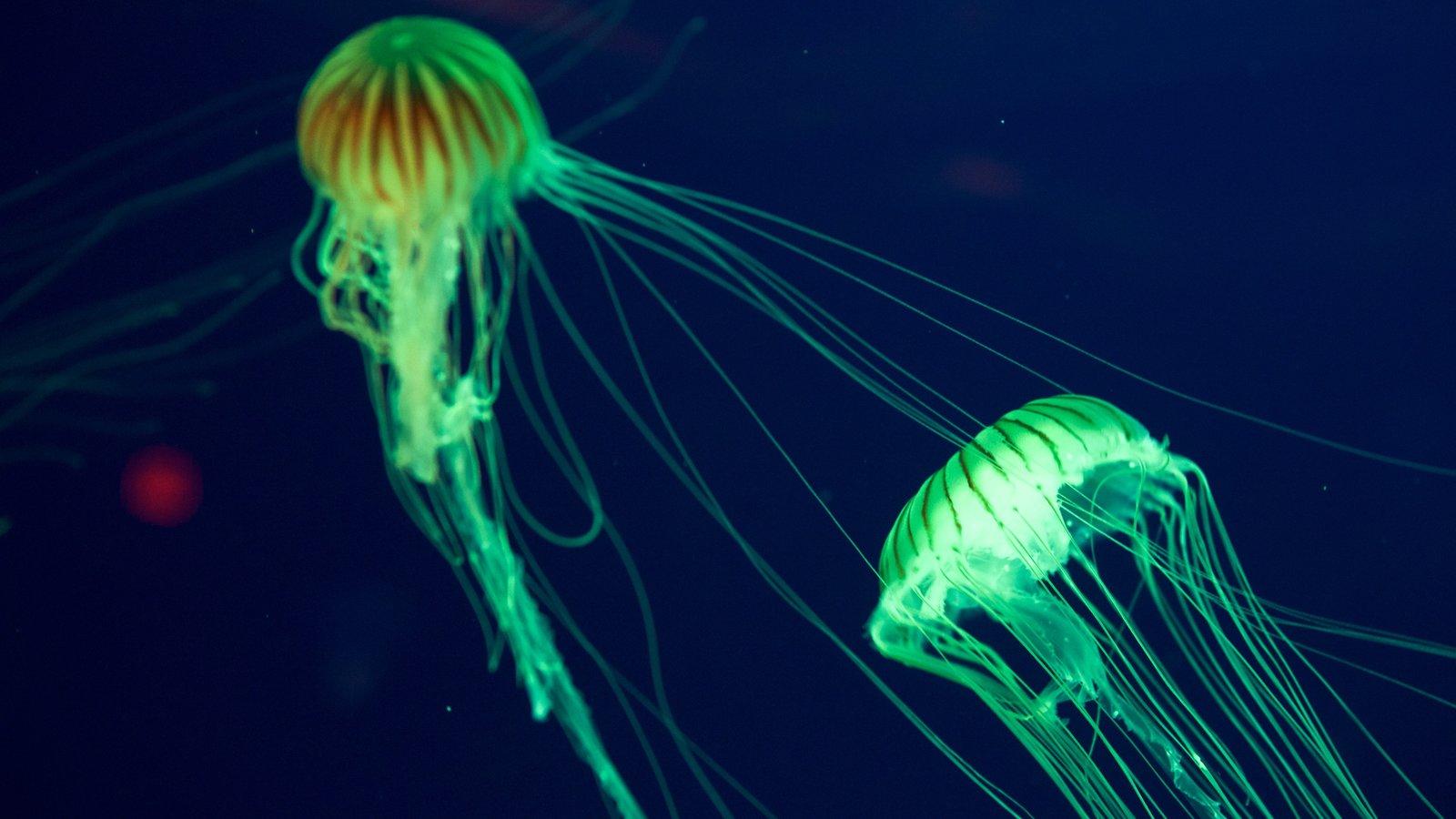 Região costeira da Carolina do Sul que inclui vida marinha