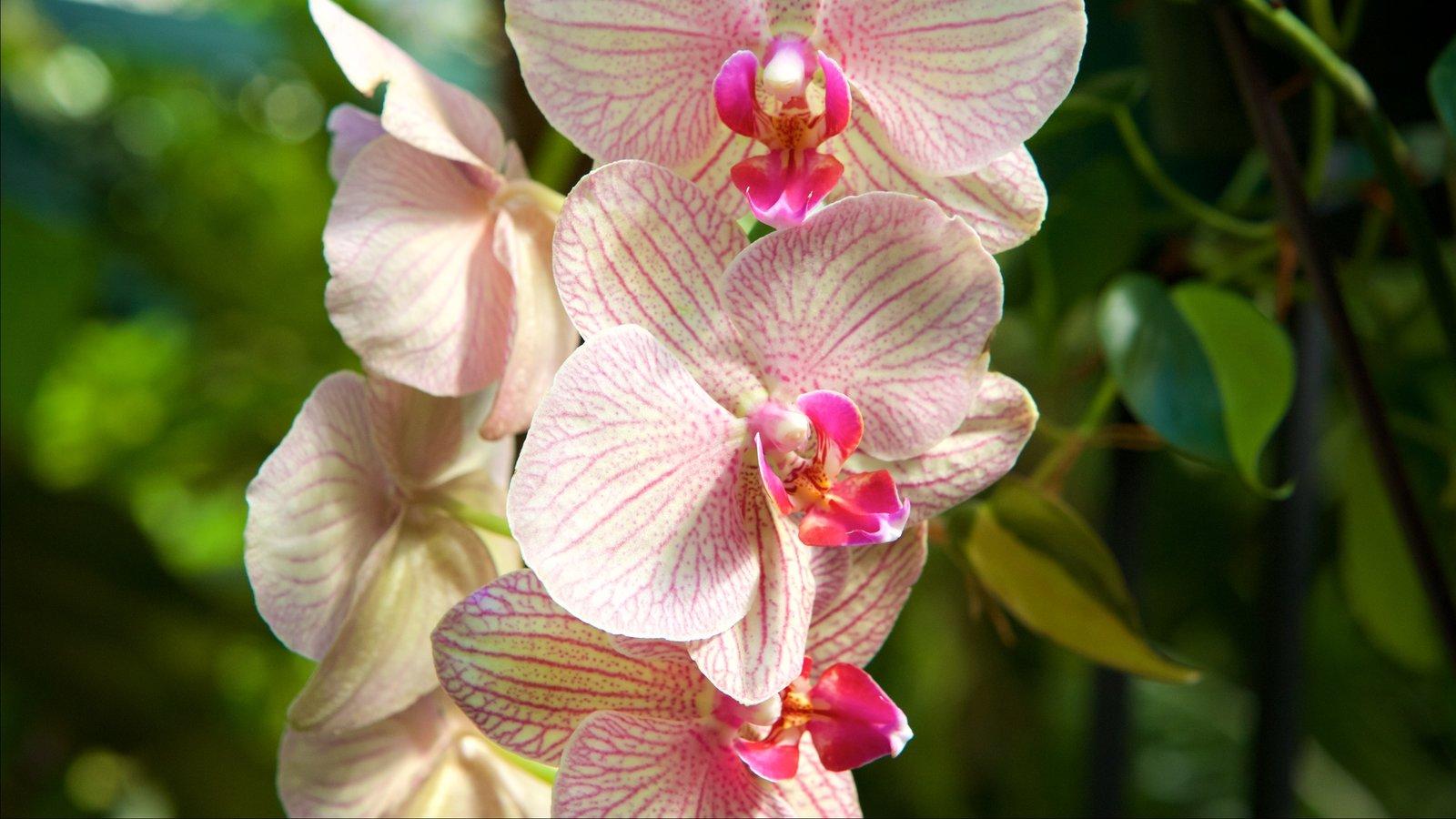 Região costeira da Carolina do Sul que inclui flores