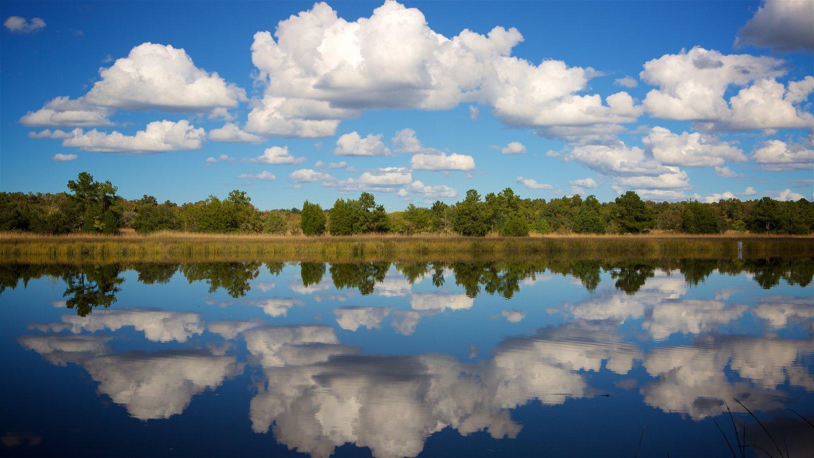 Charleston caracterizando pântano e um rio ou córrego