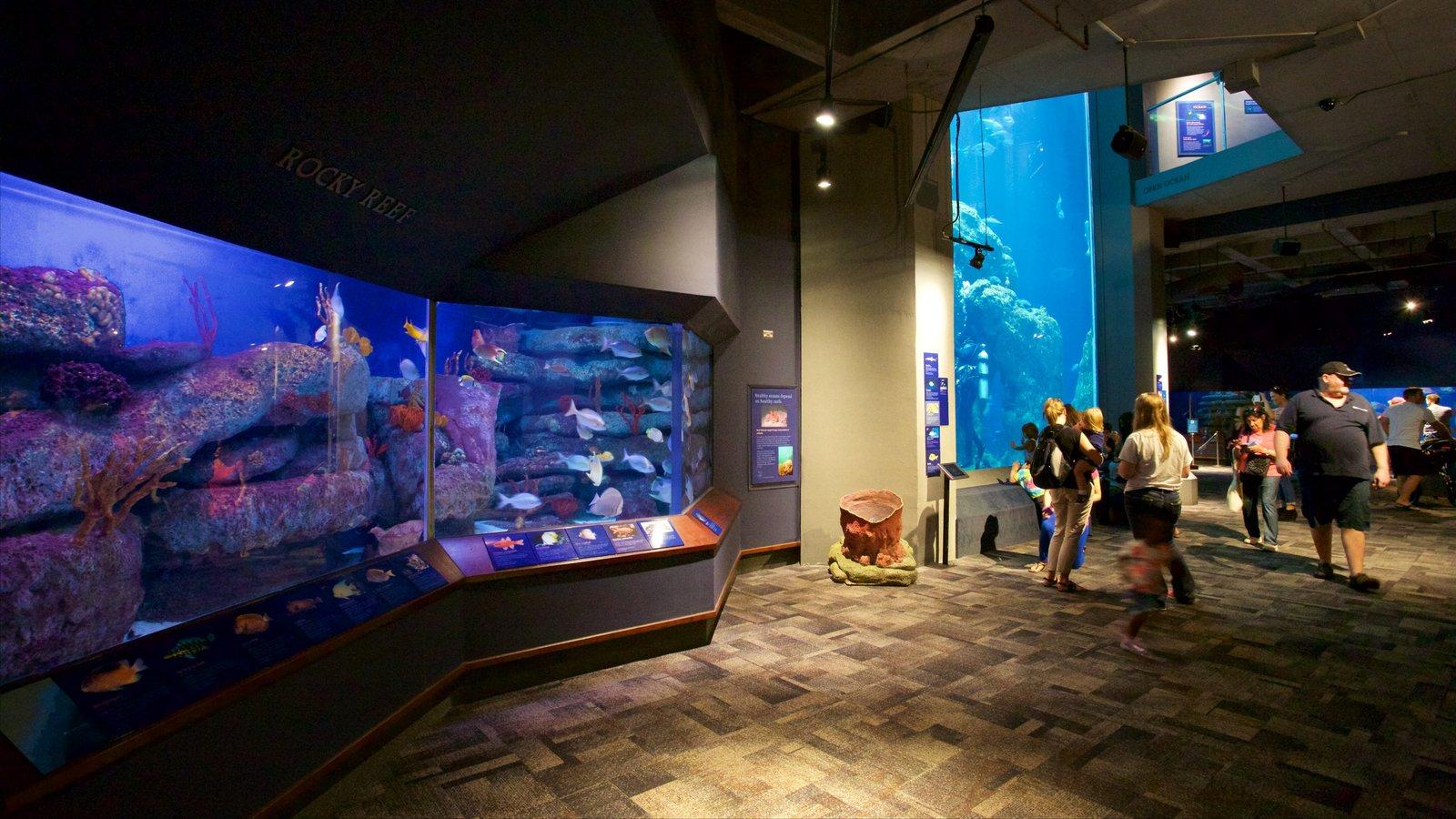 South Carolina Aquarium mostrando vistas internas e vida marinha