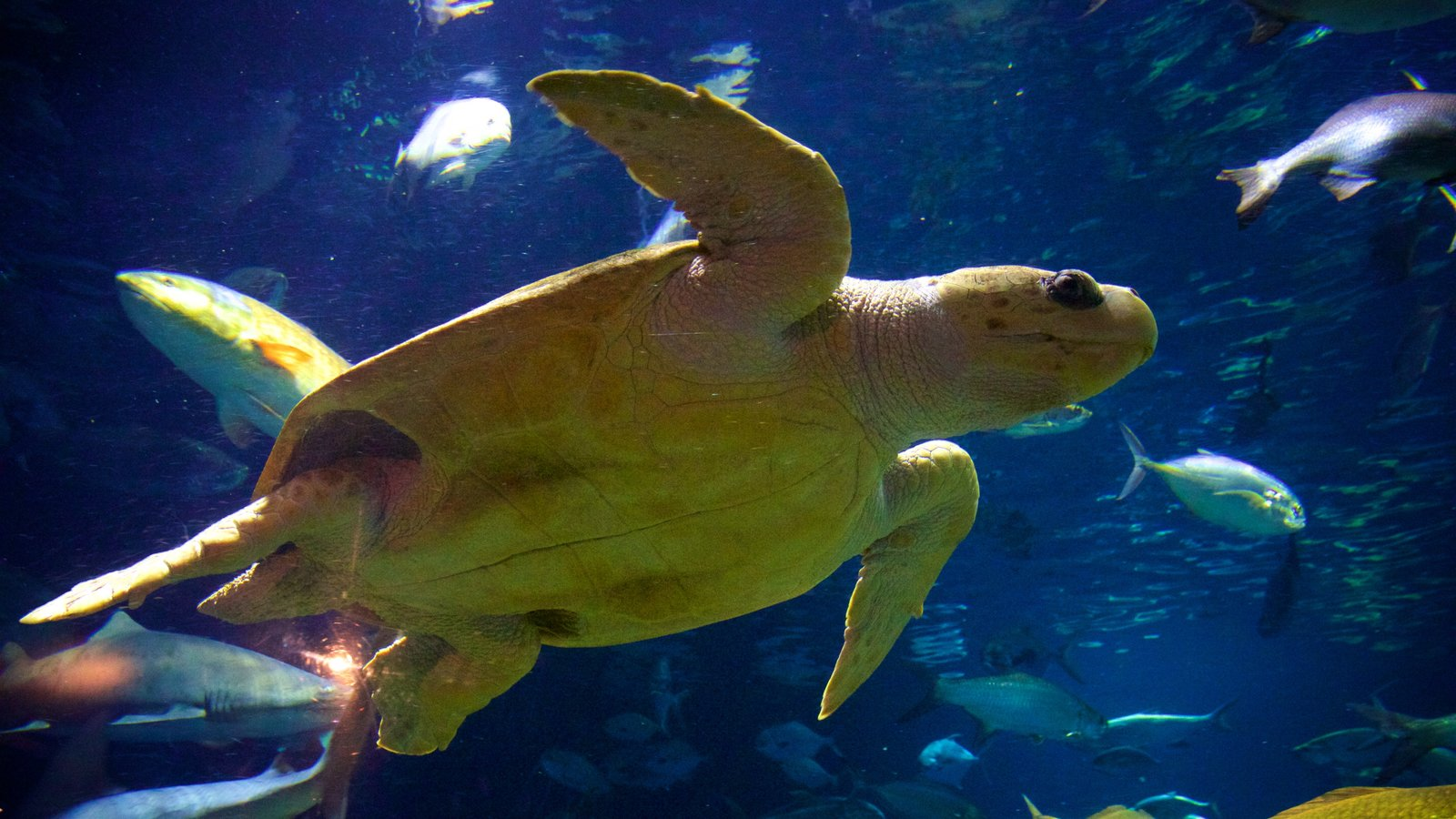 South Carolina Aquarium caracterizando vida marinha