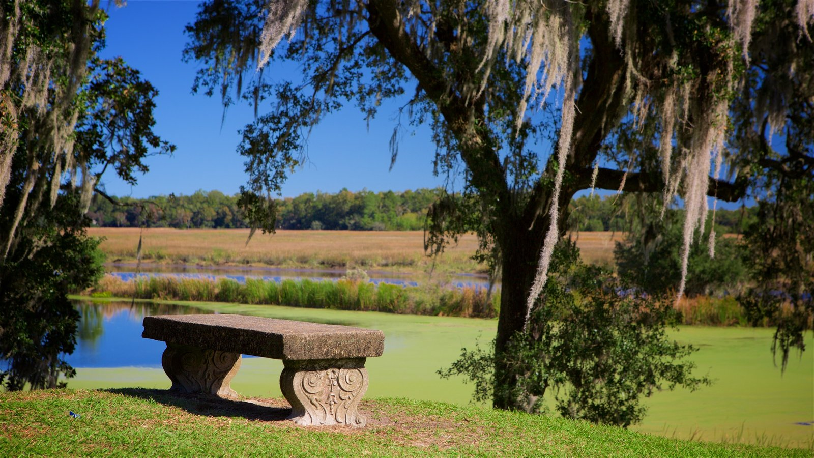Middleton Place caracterizando um jardim e cenas tranquilas