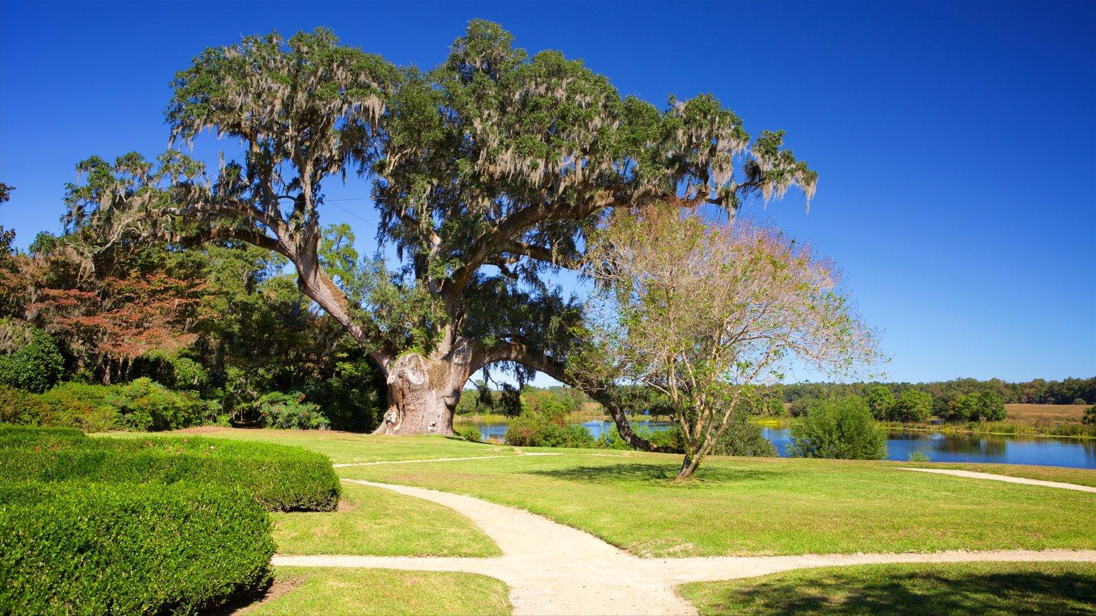 Middleton Place que inclui um parque