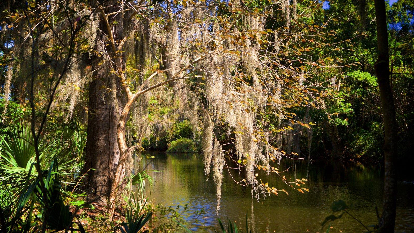 Magnolia Plantation and Gardens que inclui pântano e um rio ou córrego
