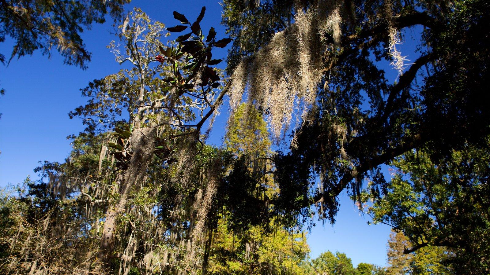 Magnolia Plantation and Gardens que inclui um parque